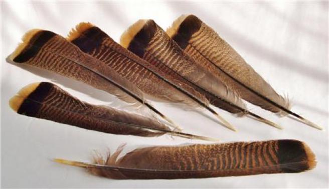 Перья дикой индейки