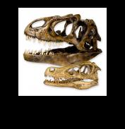 Другие черепа