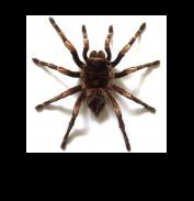 Рамки с пауками