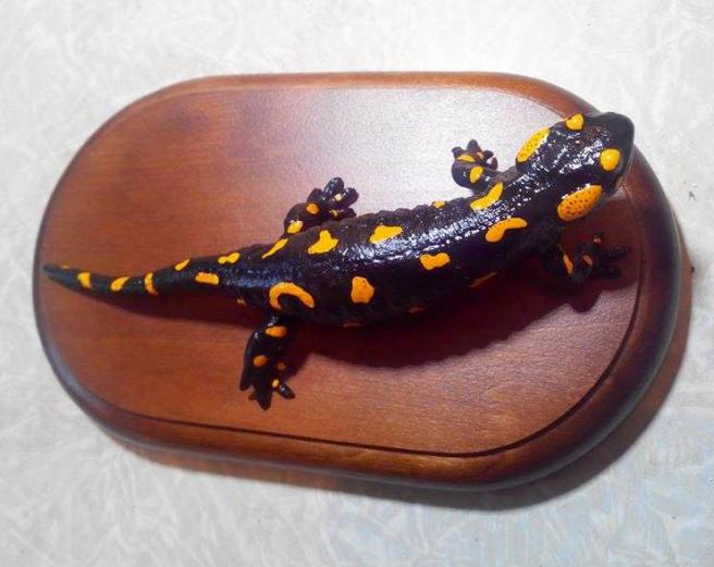 Чучело саламандры